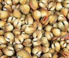 cocquillages_12172_fr